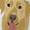 Labradors/Brown Buckle