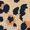 Leopard/Black Buckle