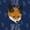 Fox Sake/Navy Buckle