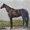 Vintage Horses