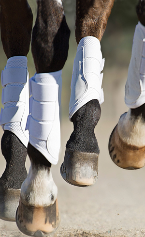 Western Horse Boots Image
