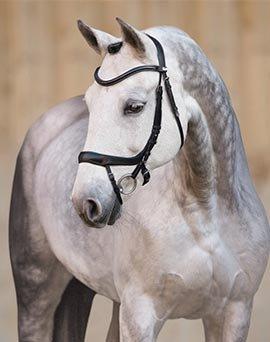 Dressage Horse Tack - Shop Now!