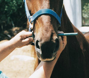 """HORSE TACK 5/"""" Horse BIT FULL CHEEK WITH LINK"""