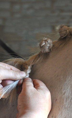 Braiding & Tails Image