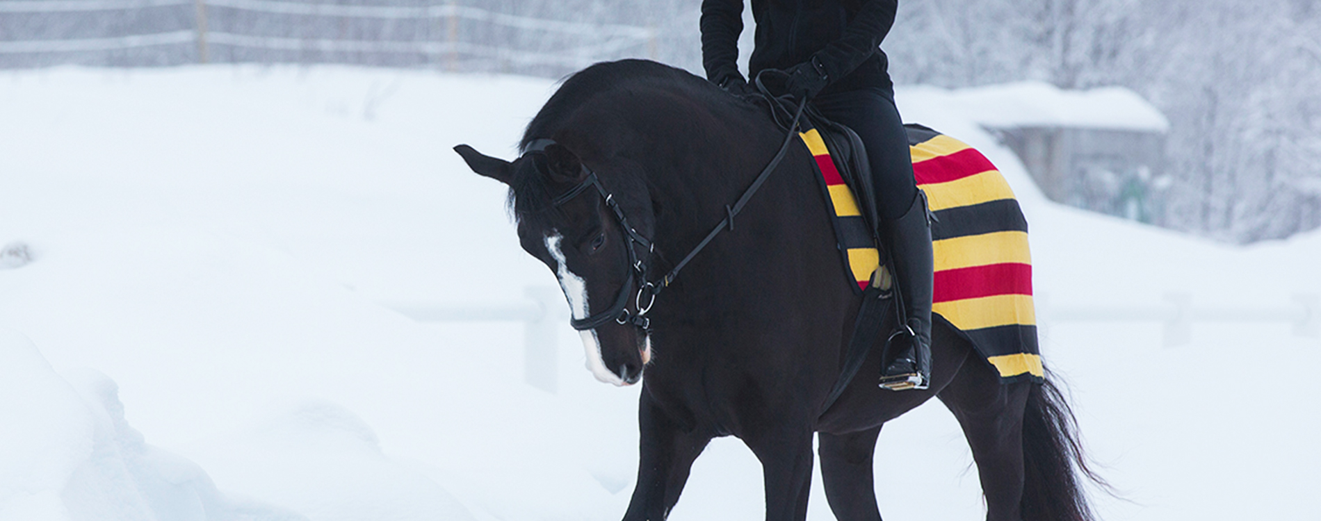 Cold Weather Riding Tips Dover Saddlery