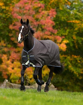 Horse Blankets - Shop Now!