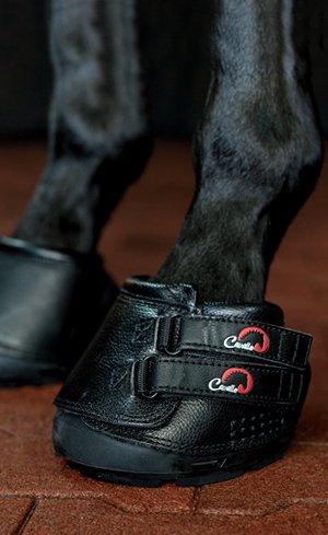 Hoof Care Image