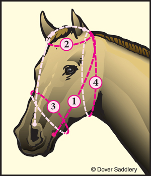 Bridle Sizes How To Measure For A Bridle Dover Saddlery