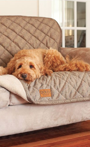 Dog Seat Covers & Couch Covers Image