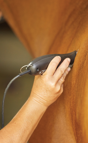 Horse Clippers Image