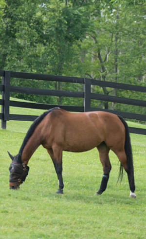Horse Wormers Image