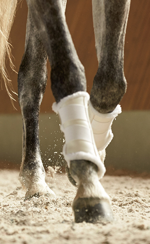 Horse Boots & Wraps Image
