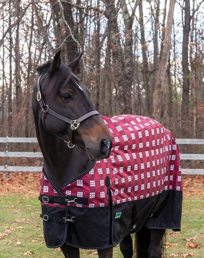 Rider's International 600D Mid-Weight Turnout Blanket- 40% OFF!