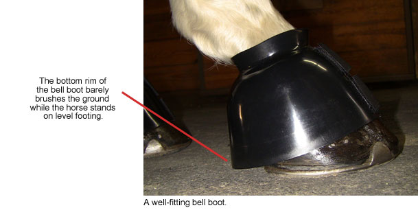 How to Select and Fit Bell Boots | Dover Saddlery