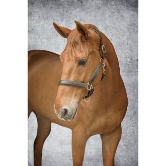 Dover Saddlery® Lined Halter