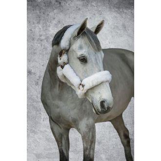 Dover Saddlery® Premium Shipping Halter