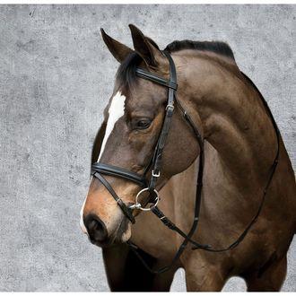 Size Horse-F//S Cooks Beta BitlessBridle Dover Saddlery Dr Black