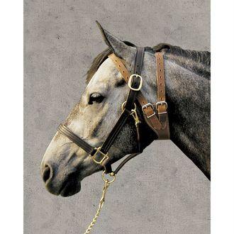Horse Anti Cribbing Windsucking Collar//Strap One Size Fully Adjustable