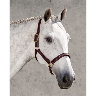 Walsh™ Signature Padded Halter