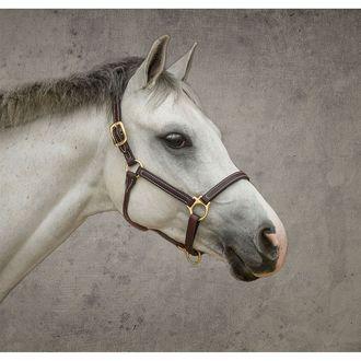 Dover Saddlery® Premium Pony Halter