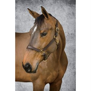Dover Saddlery® Classic Triple-Stitched Halter