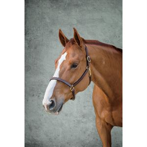 Dover Saddlery® Classic Combination Halter