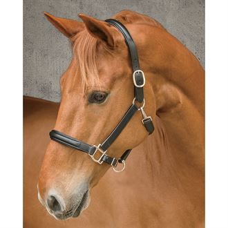 Dover Saddlery® Classic Plain Raised Padded Halter