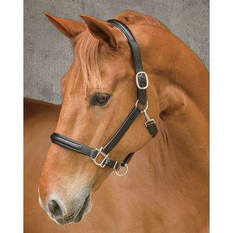 Dover Saddlery® Classic Plain Raised Padded Halter