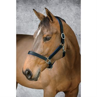 Dover Saddlery® Bright Padded Halter