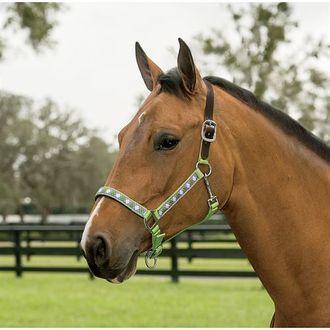 horse halters dover saddlery dover saddlery