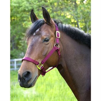 Dover Saddlery® Everyday Nylon Breakaway Halter