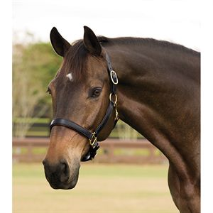 Dover Saddlery® Lined Halter