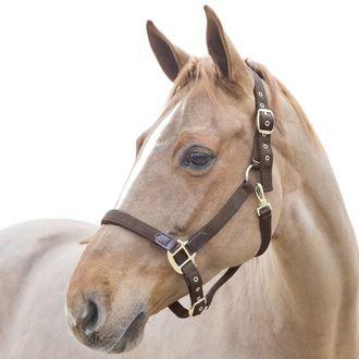 Horze Holbrook Horse Halter