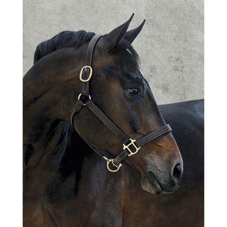 Dover Saddlery® Palermo Halter