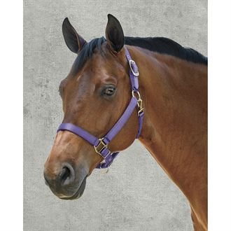 Dover Saddlery® Heavy Nylon Halter