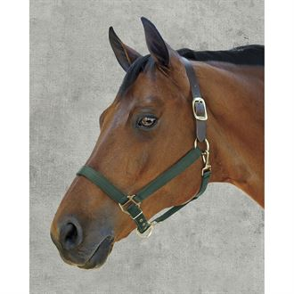 Dover Saddlery® Heavy Nylon Breakaway Halter