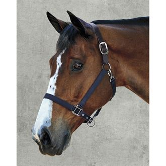 Suffolk® by Dover Saddlery® Breakaway Halter