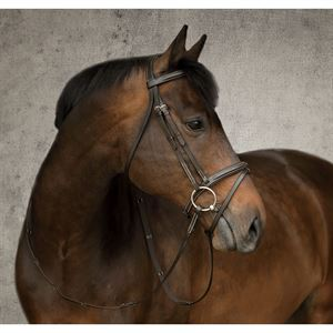 Dover Saddlery® Single Crown Flash Bridle