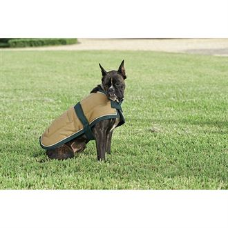 Blue Ribbon Custom Quilted Dog Jacket