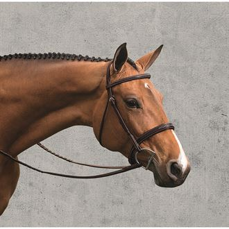 Veritas Fancy Raised Bridle by Vespucci