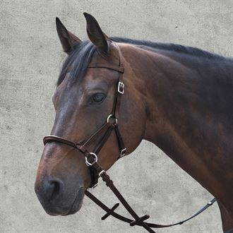 Waldhausen Linda Tellington-Jones Lindell Bridle