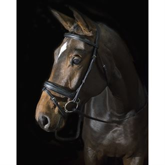 Ovation® ATS Crank Flash Dressage Bridle