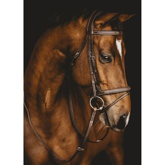 Arion French Noseband Bridle