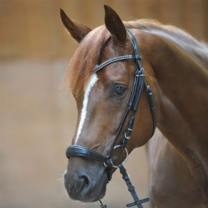 Kavalkade Isabella Drop Nose Bridle