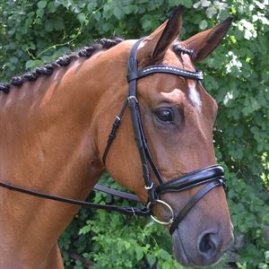 Red Barn Topline Bridle