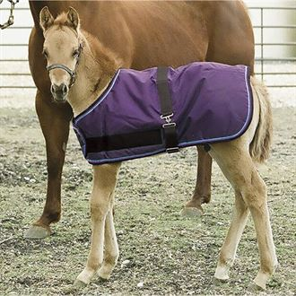 Kensington™ Large Foal All Around Adjustable Medium-Weight Blanket