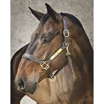 Dover Saddlery® Classic Leather Halter