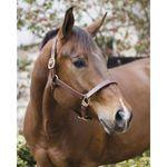 Perri's® Horse Professional Show Halter