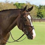 VESP SQ RAISED FIG 8 BRIDLE