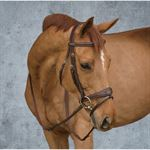 Dy'on® Anatomic Bridle